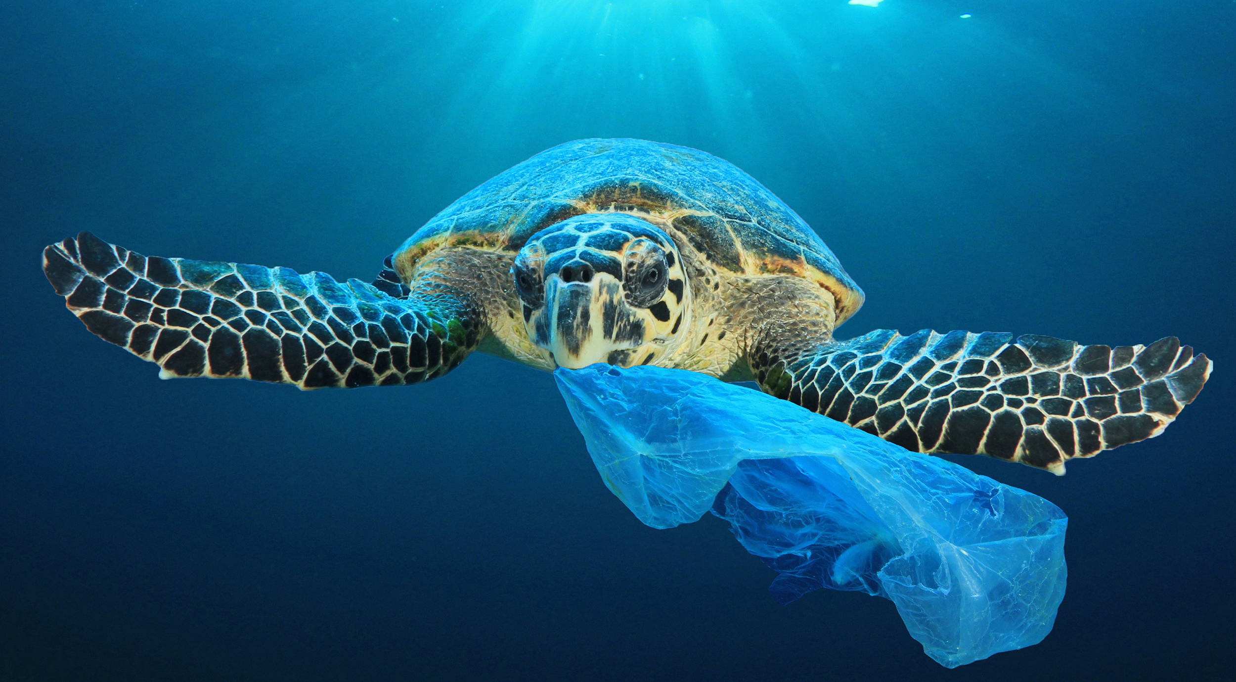 turtle with plastic bag in mouth.jpg